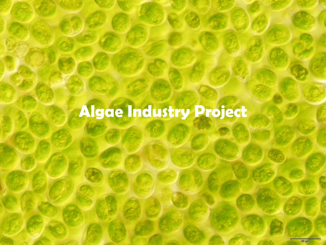 Algae industry project book